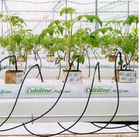 Drip irrigation photo.jpg