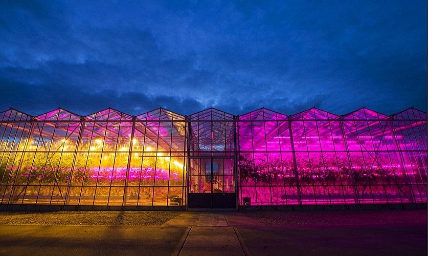 LED Lit glasshouse.jpg