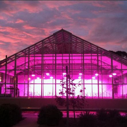 LED lit Widespan glasshouse.jpg