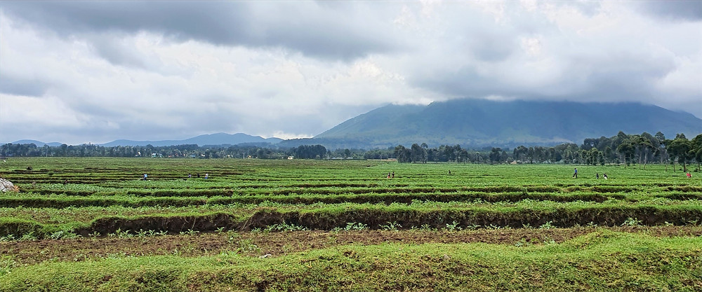 Image of farmland and a volcano in the background; northern Rwanda