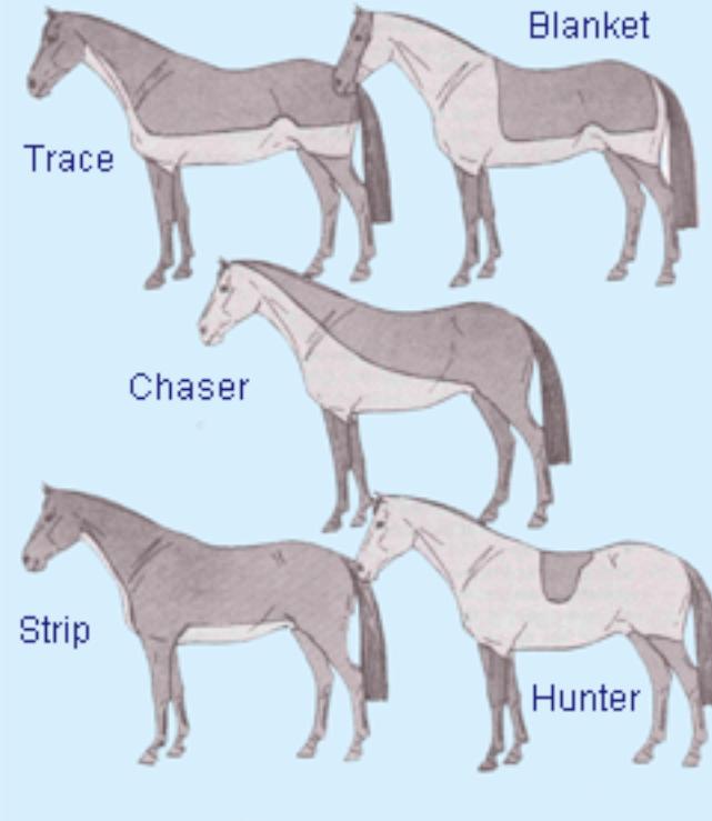 Body clipping horses