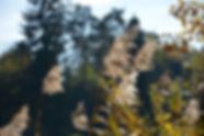 Schilf am Montiggler See; Ferienwohnungen Nals