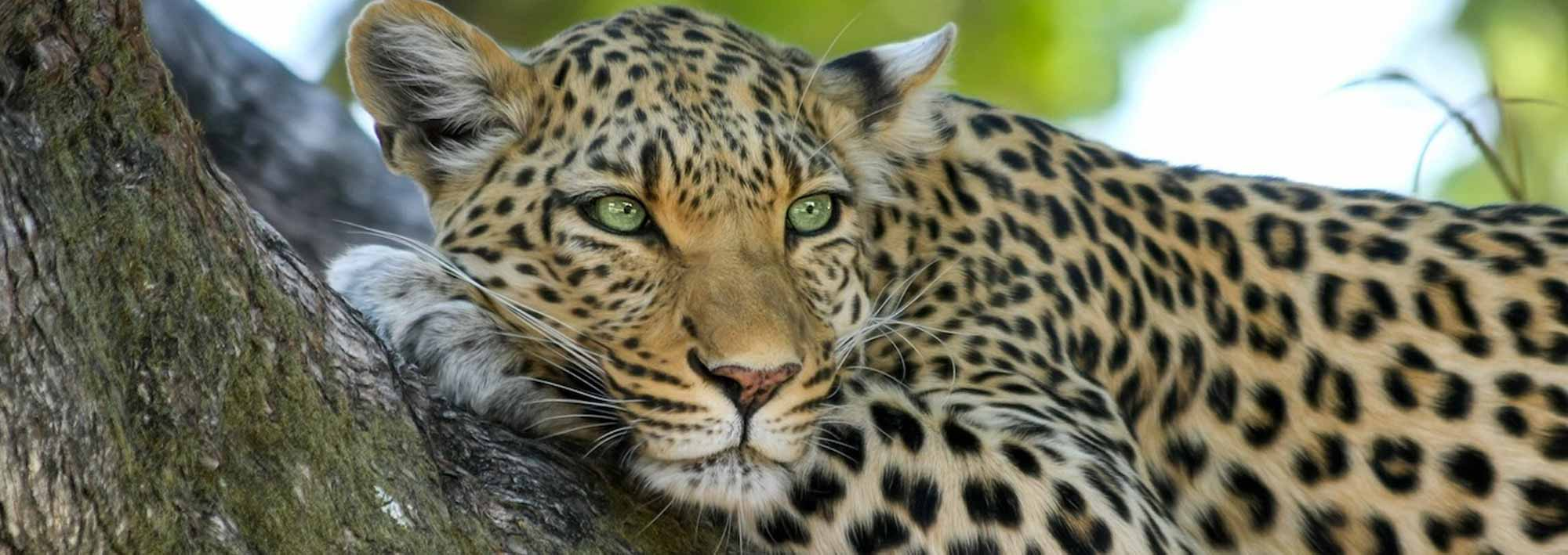 safari-header