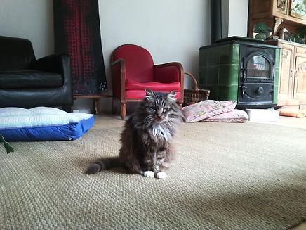 Chambre d'hôtes Au chat ronfleur