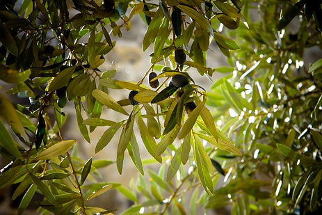 olives-789140.jpg