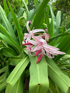Sample of Flowers on the Island