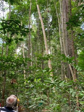 Tapajos National Forest