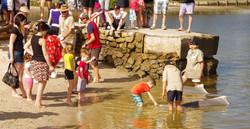 Tin Can Bay Dolphin Feeding 2