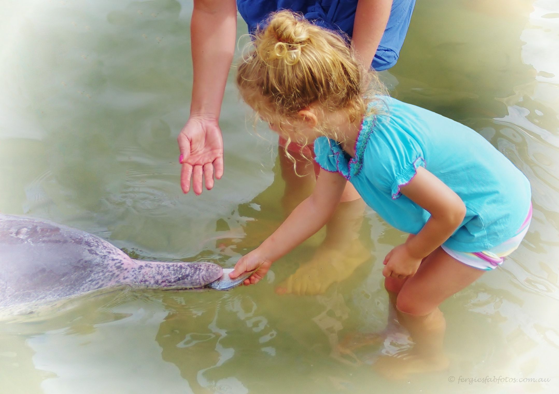 Tin Can Bay Dolphin Feeding 5