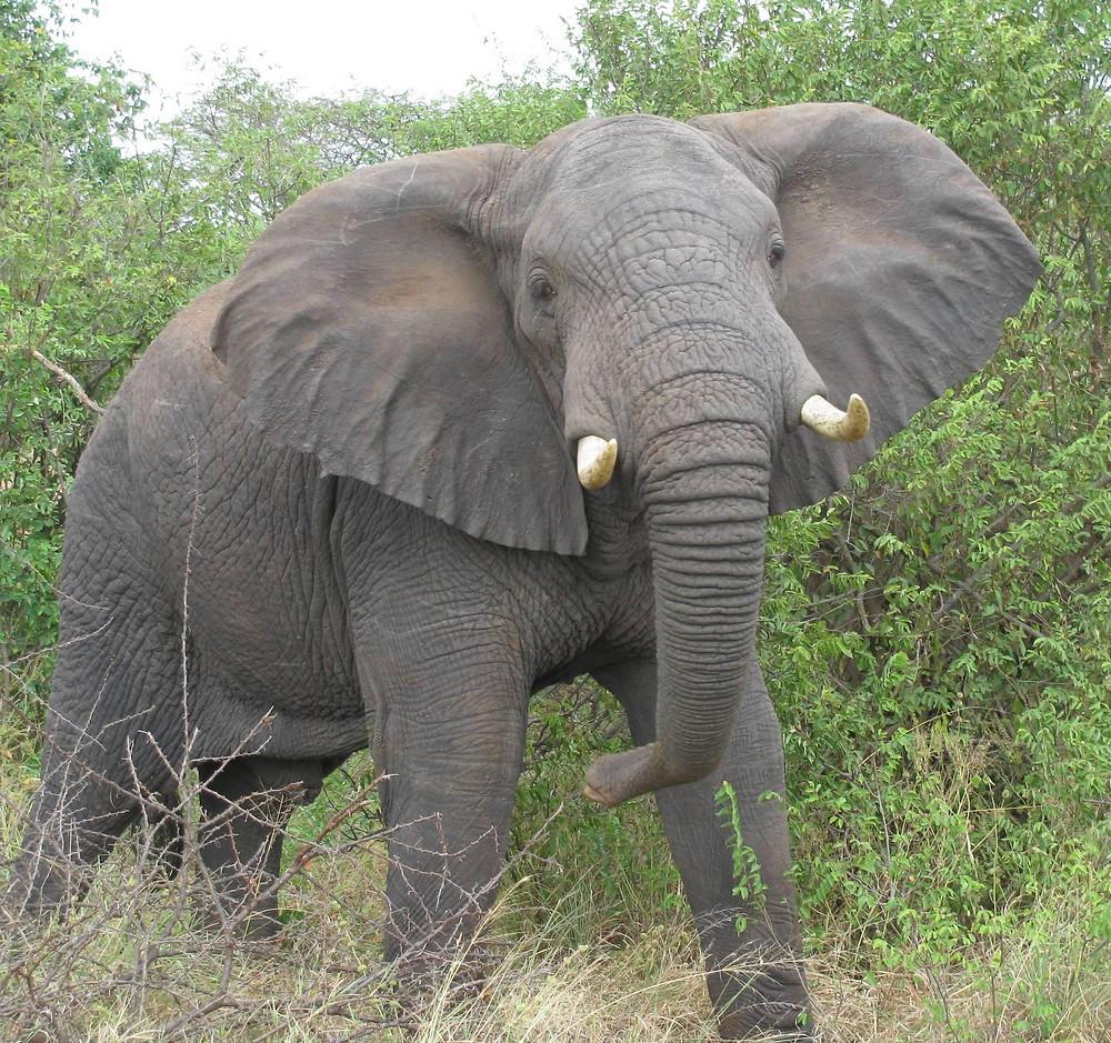UoS Elephant.jpeg