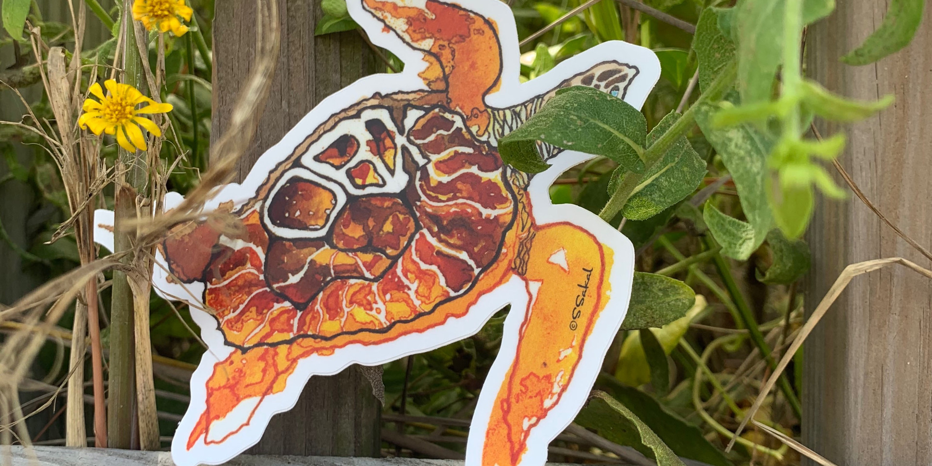 OBX Turtle sticker