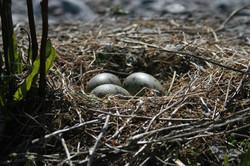 munad keril