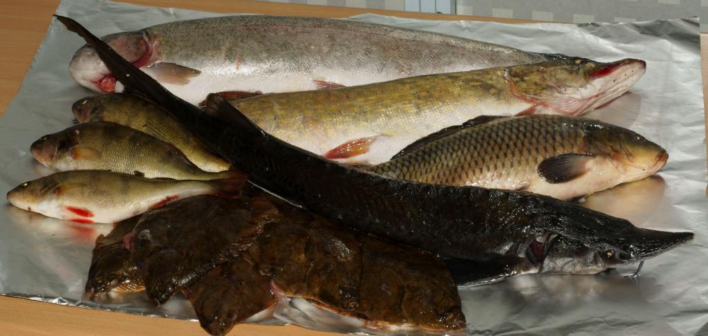 kalakoolitus