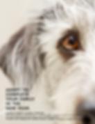 Hardin County Animal Shelter - Elizabeth