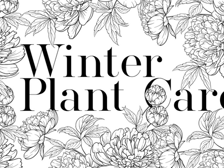 DIXIE YARD WORKS: Winter Plant Care
