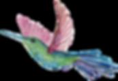 Hummingbird_edited.png