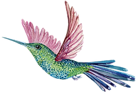 Hummingbird_edited.png