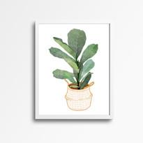 Ficus Plant White Frame.jpg