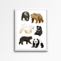 bear species white frame.jpg