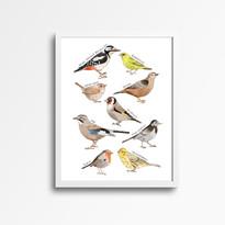 british bird mockup.jpg