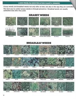 Lawn Weeds