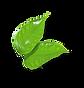 leaf-3.png