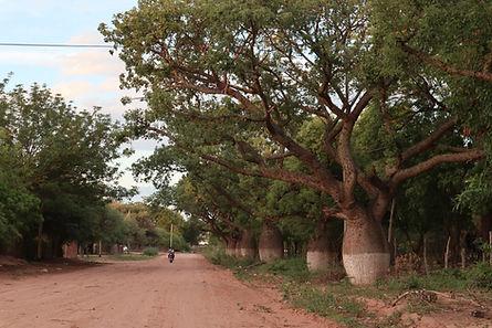 Chaco Salteño