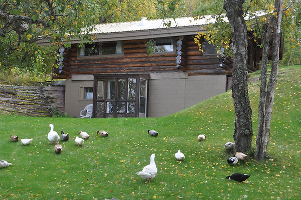 Lake side log cabin - Daniels Lake Cabins/Kenai Peninsula, Alaska/Vacation Rentals