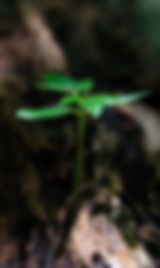 pexels-photo-1151418.jpeg
