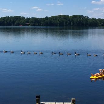 Wittig's Swim Area