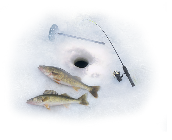 icefish2.png
