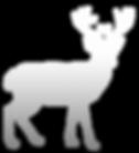 White_Deer_BJ.png