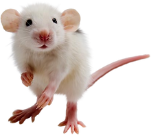 Rodents1.png
