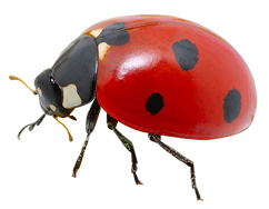 Insects 1.png