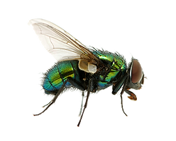 fly_PNG3955.png