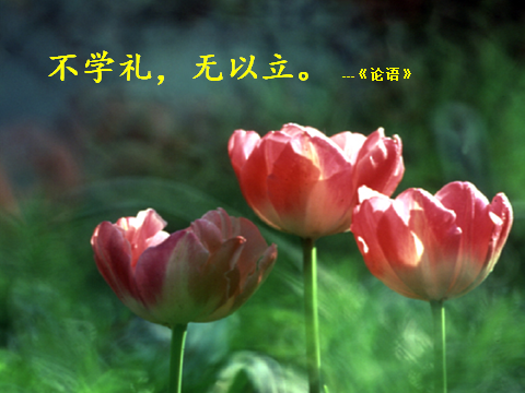 Picture11(不学礼,无以立).png