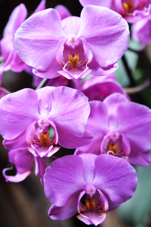 après midi relax orchidée