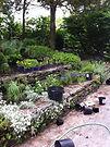 Organic Landscape