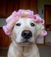 hairdrying2.jpg