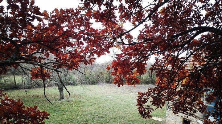 Pogled sa kućice na drvetu