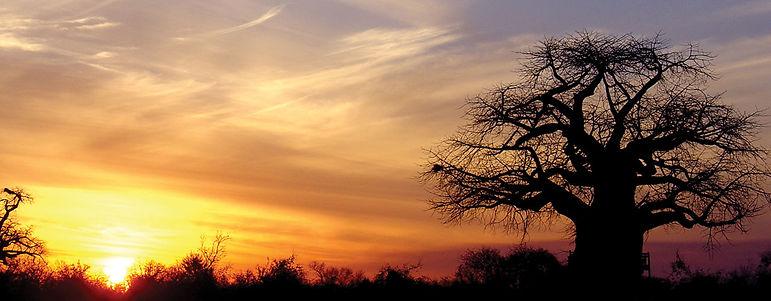 Baobab-kalahari.jpg