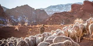 Is Christ Your Good Shepherd?