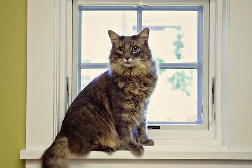 Feline friendly atmosphear
