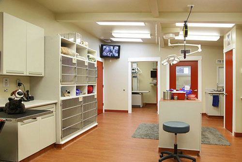 Care and treatment area