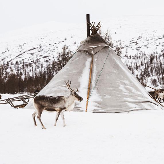 Sibérie - CV08 par Corinne Vachon