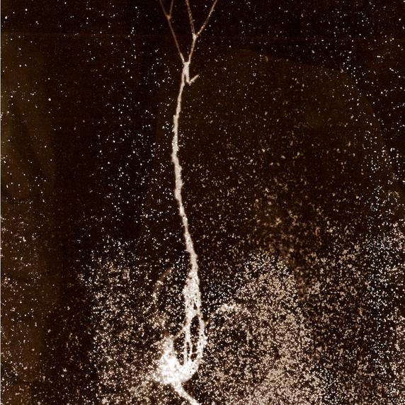 Tchernobyl Herbarium - #AT07 par Anais Tondeur