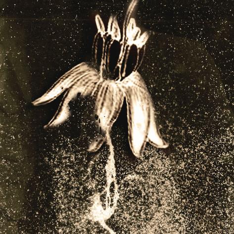 Tchernobyl Herbarium - #AT02 par Anais Tondeur