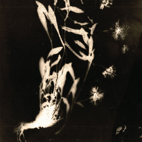 Tchernobyl Herbarium - #AT01 par Anais Tondeur