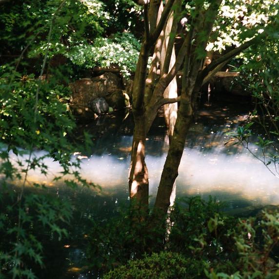 Nature - CDR01 par Charlotte de Rosnay