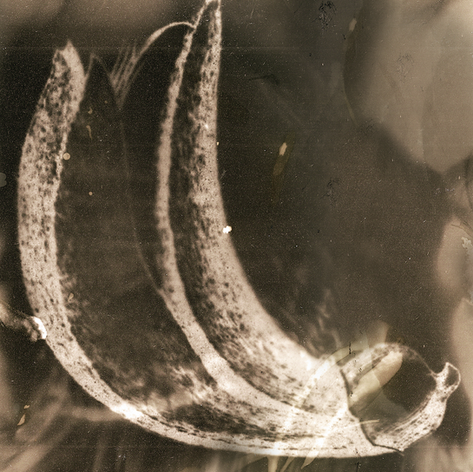 Tchernobyl Herbarium - #AT06 par Anais Tondeur